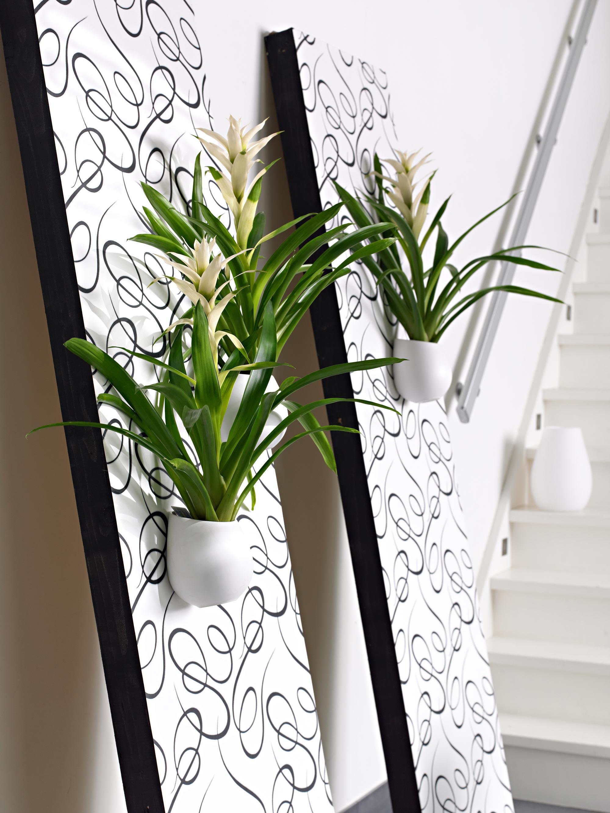 witte planten
