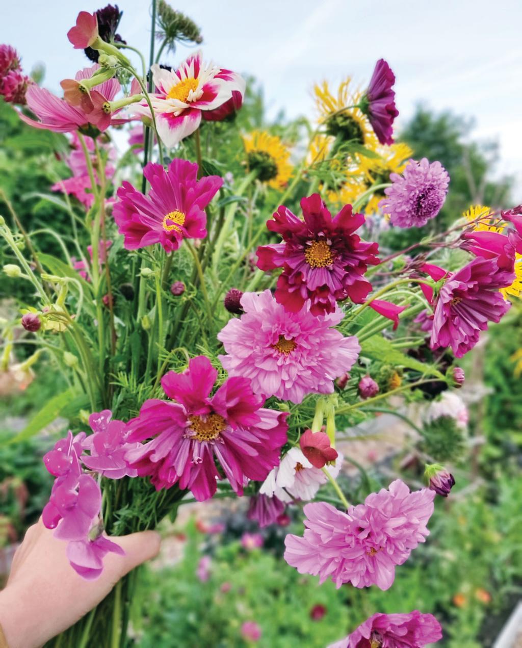 roze, gele en paarse plukbloemen