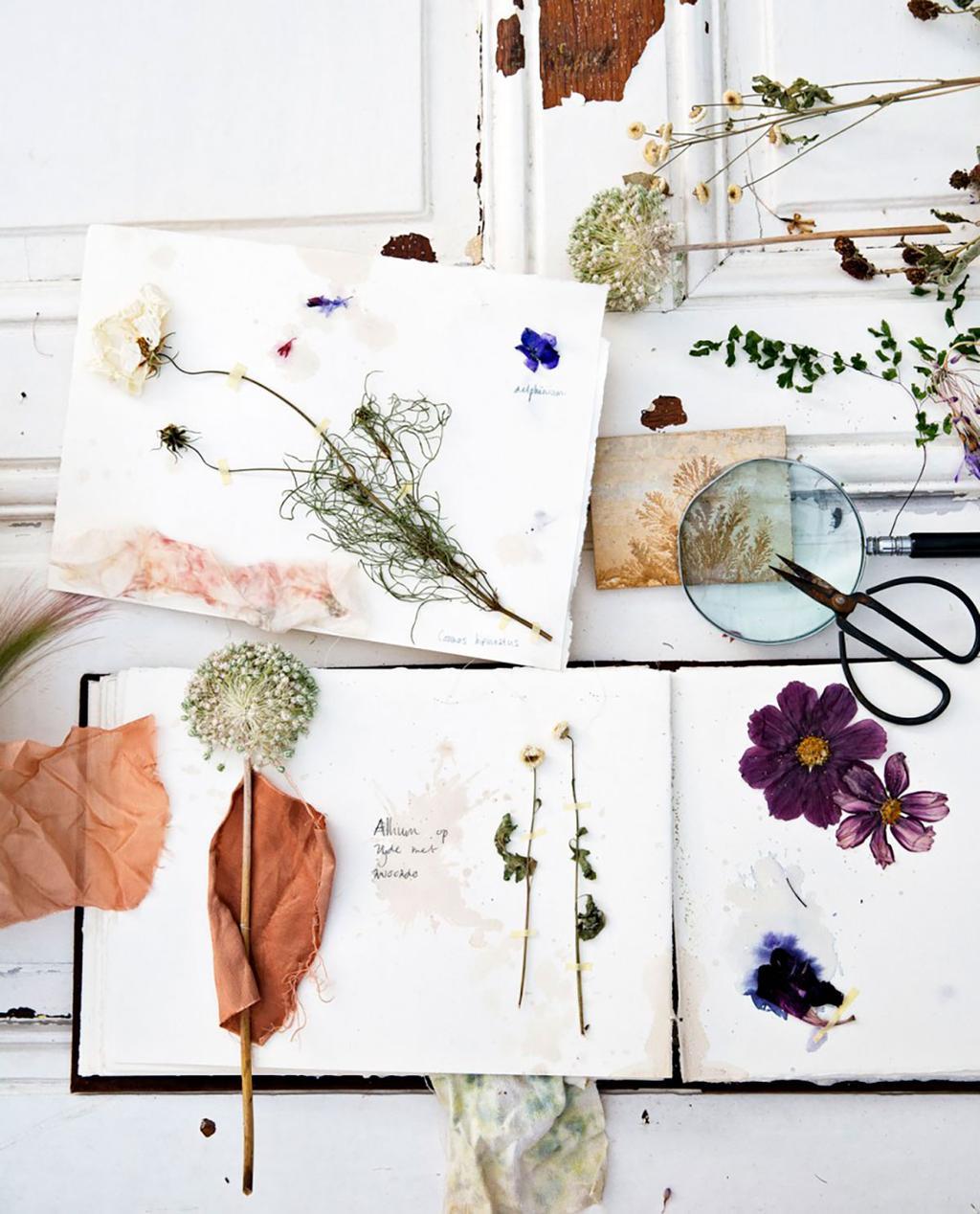 Fleurs sechees sur livre
