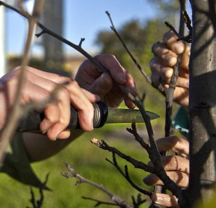 gureilla grafters - fruitbomen enten