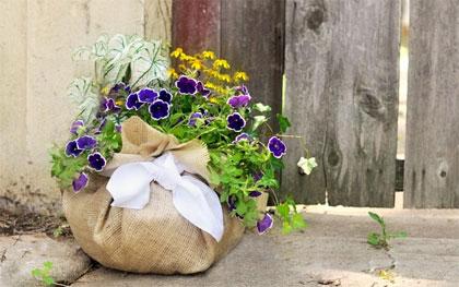 Planten in een jute zak