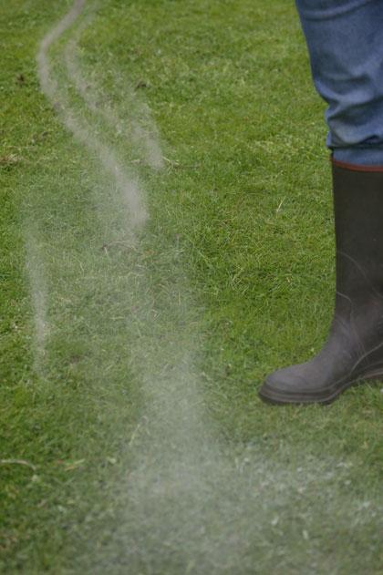 Kalk strooien op gazon en mos verwijderen