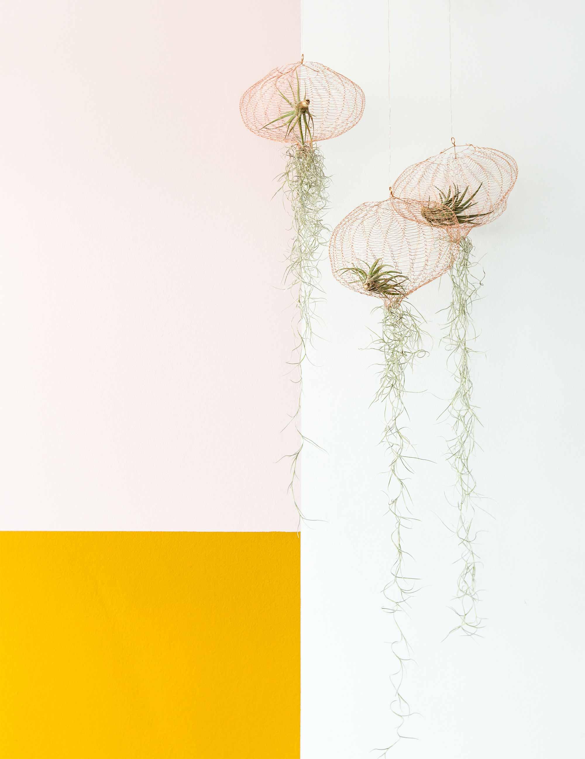 Kleuren combineren luchtplantjes