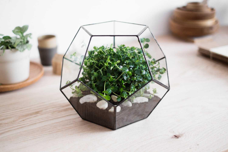terrarium aarde groen plant