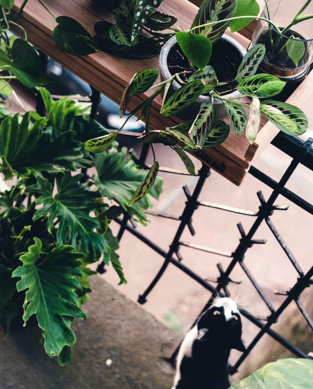 blog kristel vtwonen | balkon inrichten planten