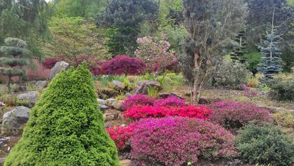 Japanse-tuin2