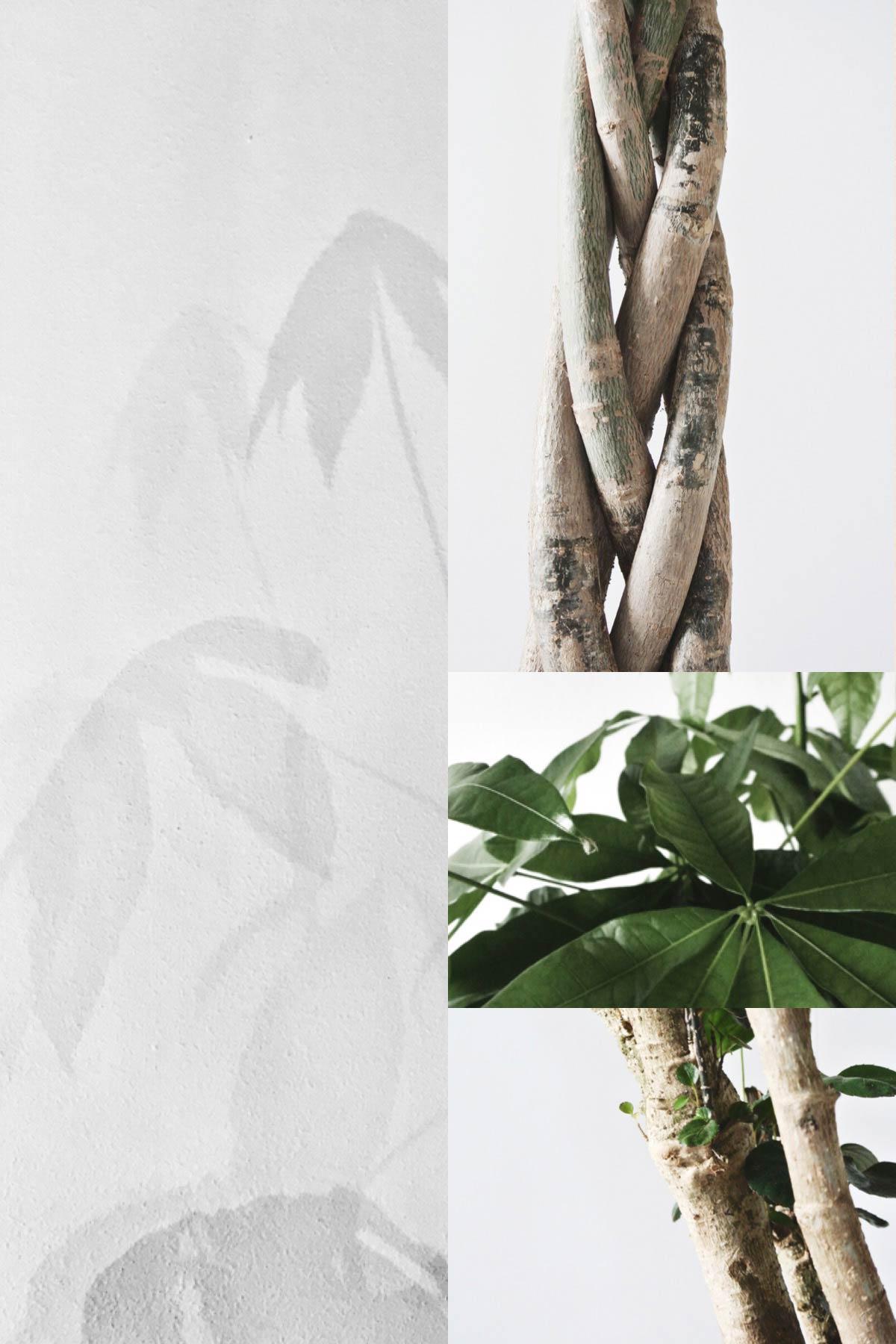 plantdetails