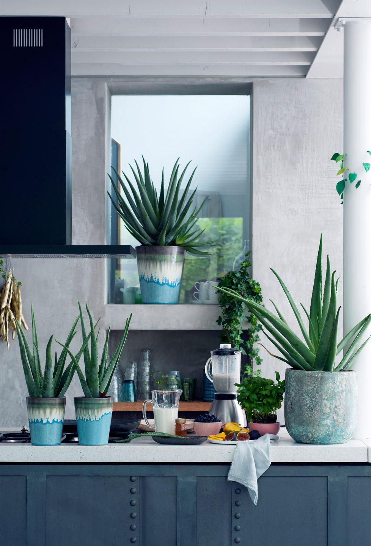 Groen in huis met kamerplanten planten