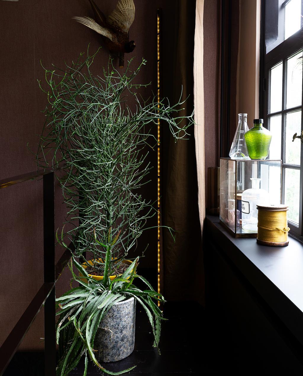 raamkozijn plant op de overloop