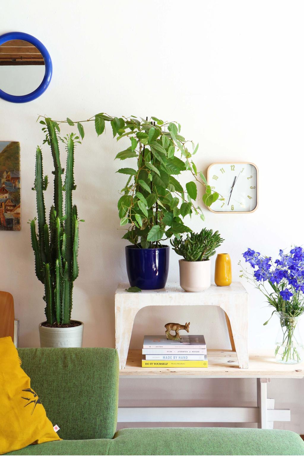 grand-cactus-plantes-sur-tabouret