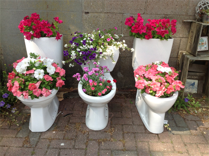 planten toiletpot