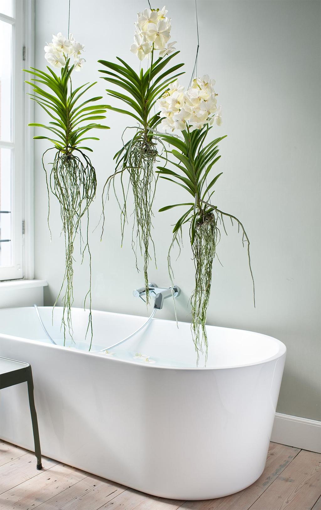 Badkamerplanten: planten voor in de badkamer