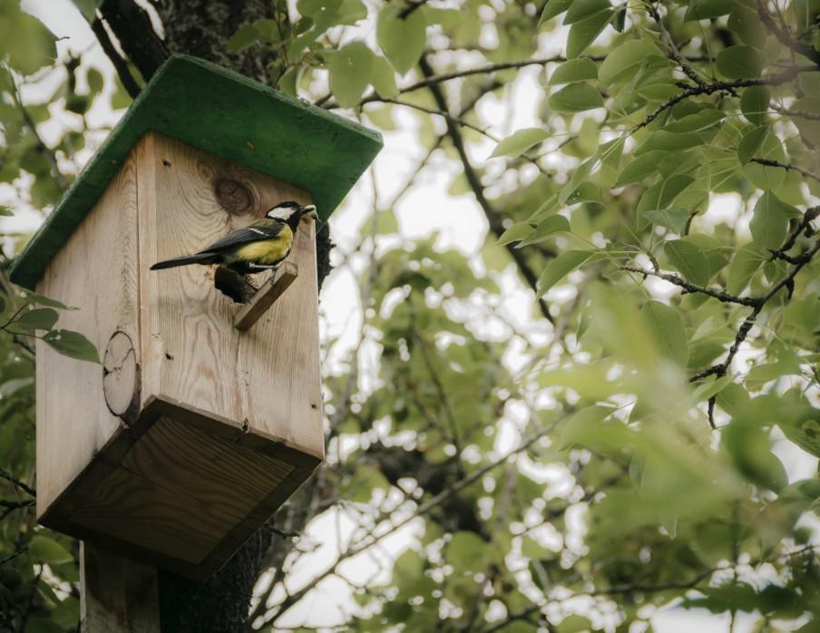 nichoir oiseaux