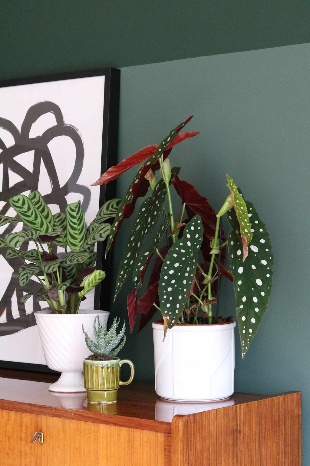 Patterned Plants My Attic