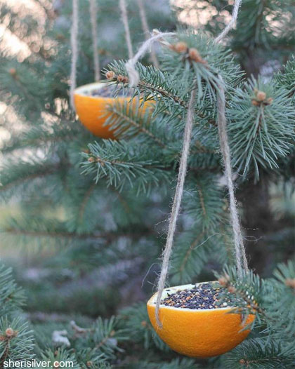 Sinaasappel met vogelzaad
