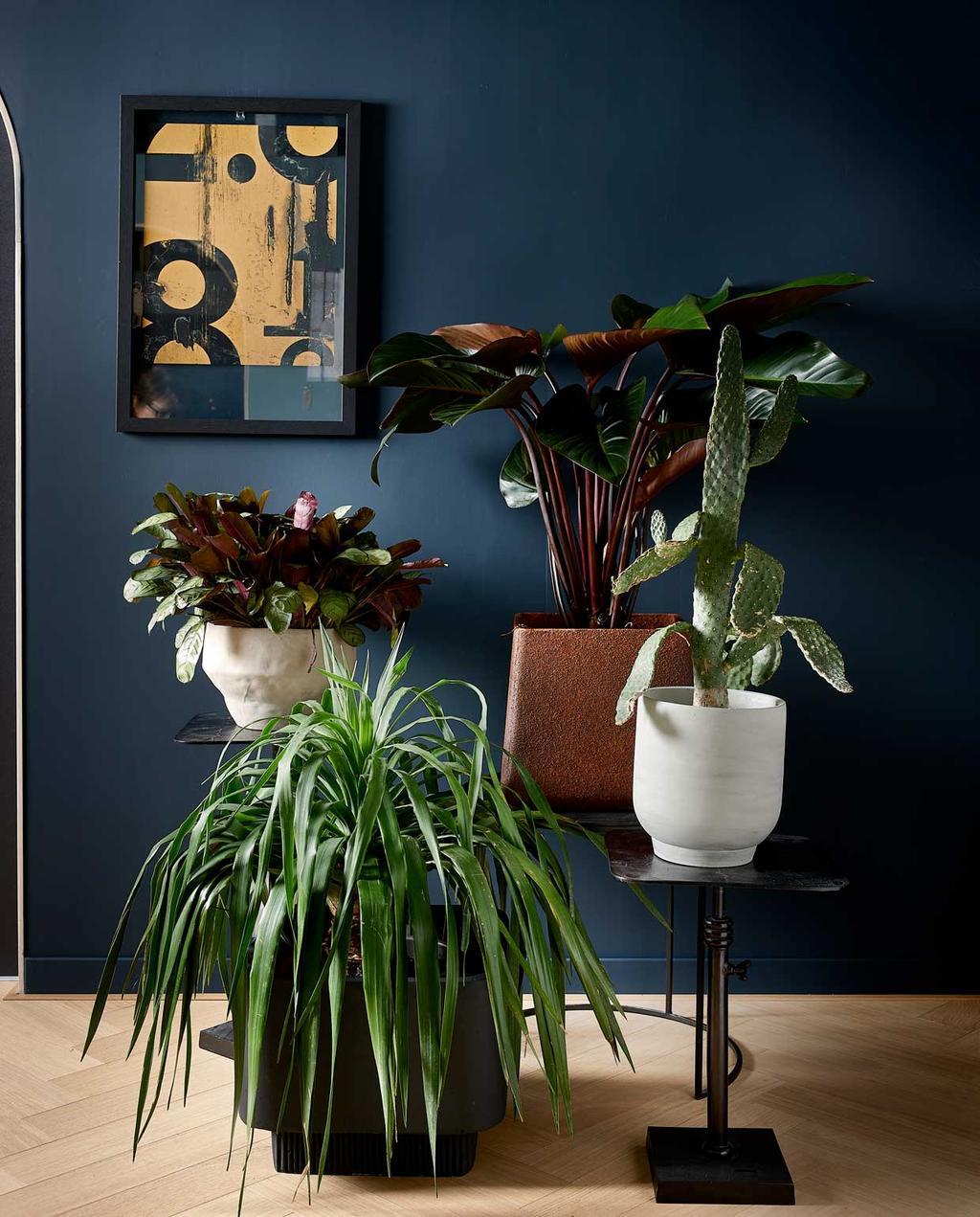 kamerplant | groenstyling | blauwe muur | calathea | plantentafel | kamerplanten met gekleurd blad