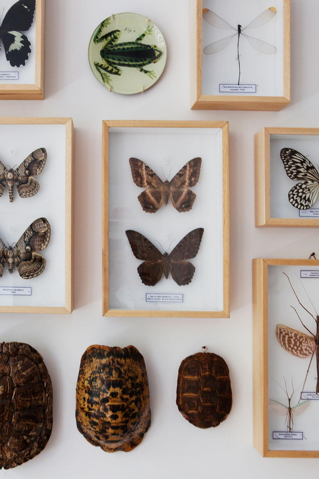 vlinder lijstjes