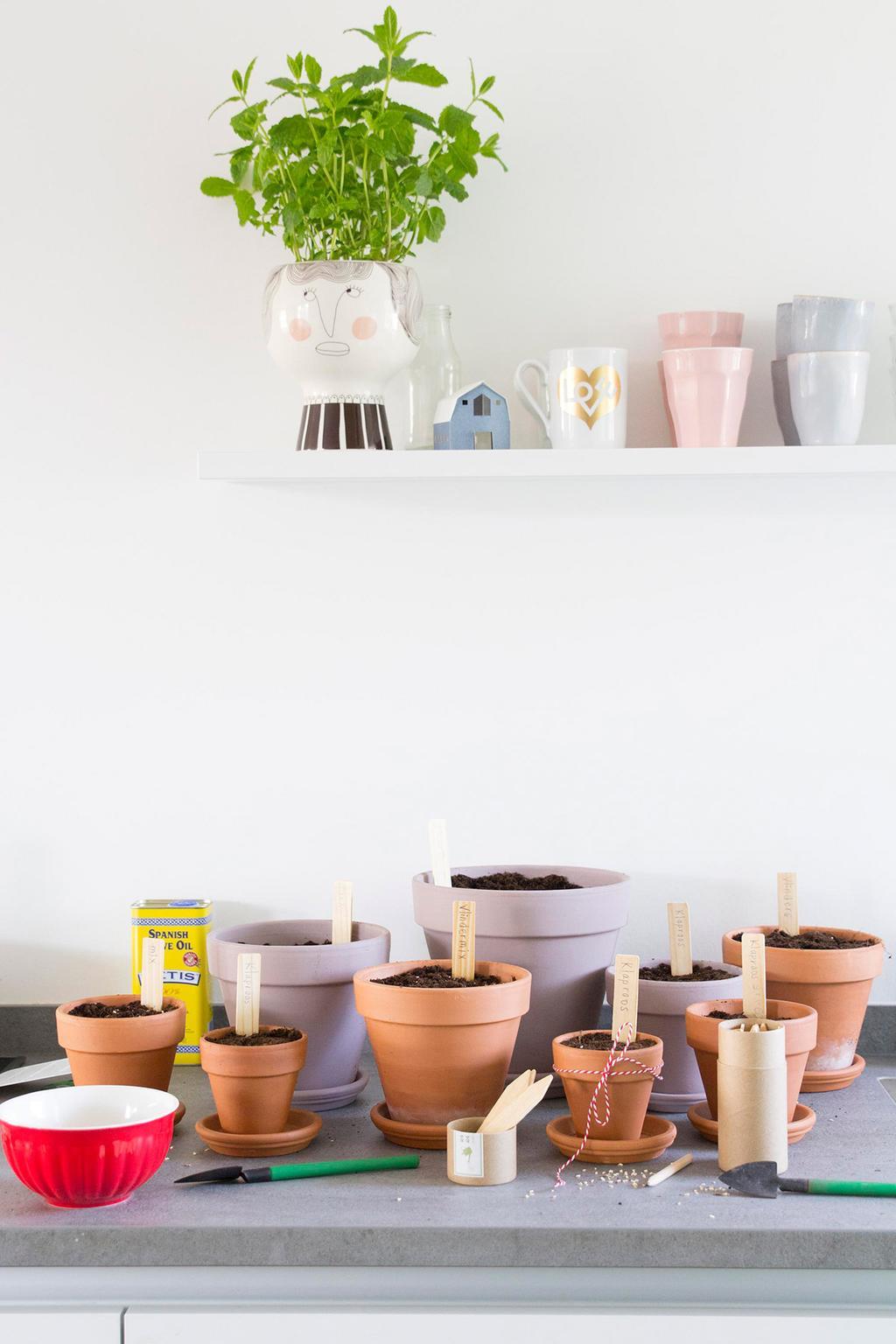 Bloemen voor een pluktuin voorzaaien in terracotta bloempotten