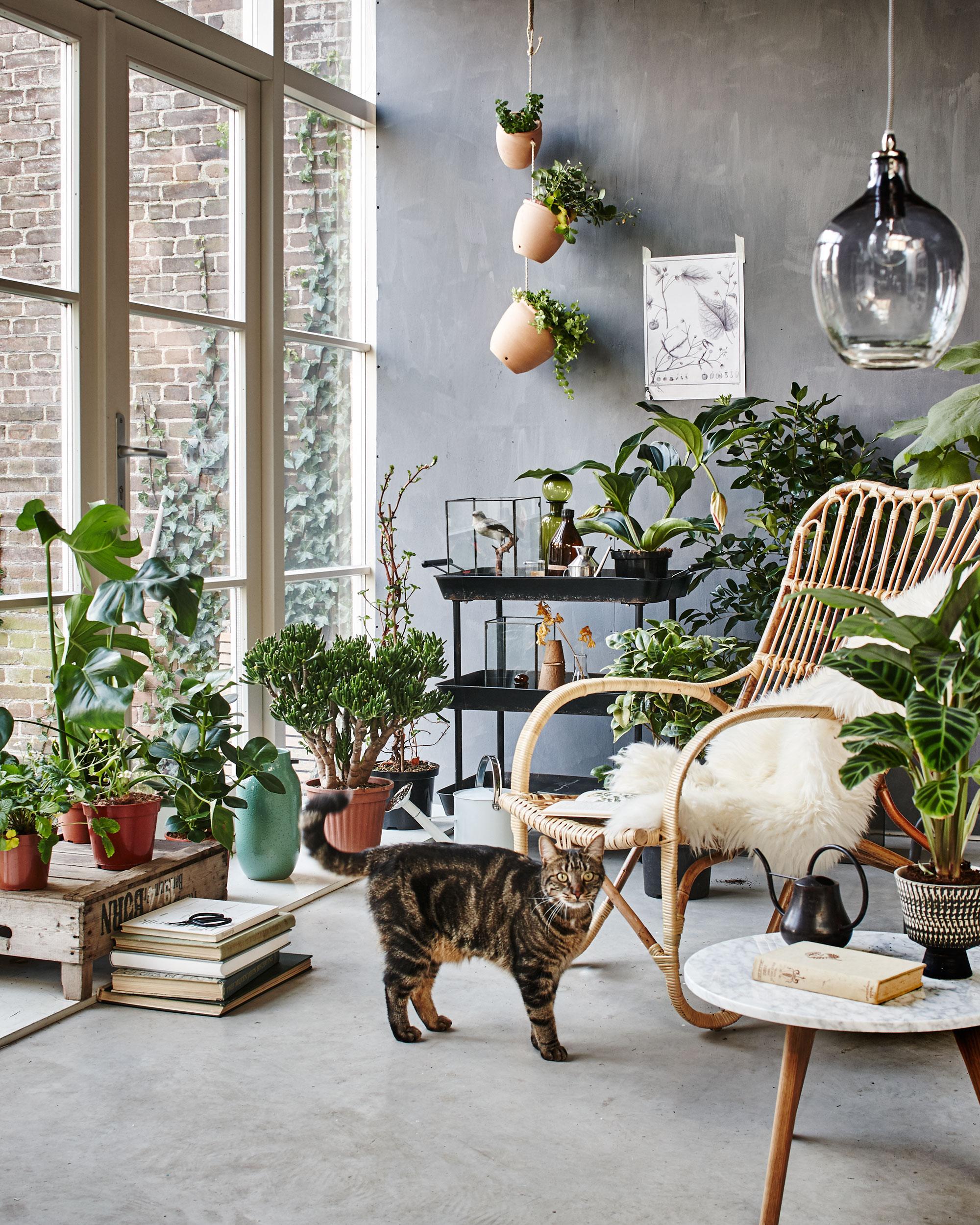 jardin terrasse tropicale
