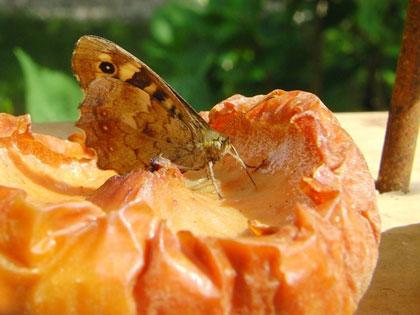 Vlindertafel