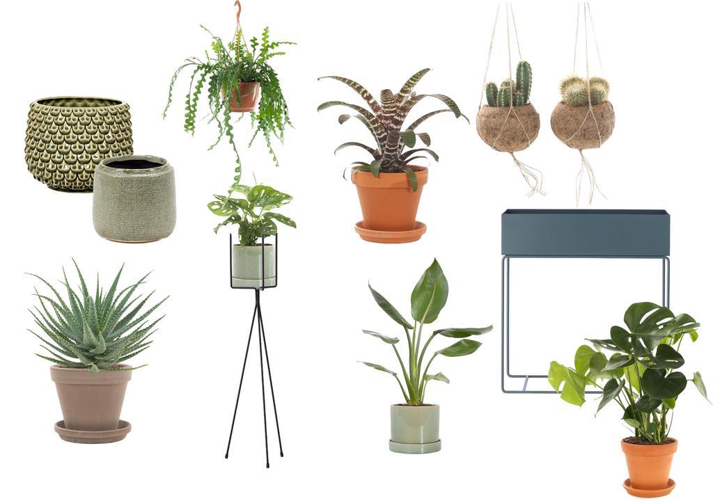 collage kamerplanten 2