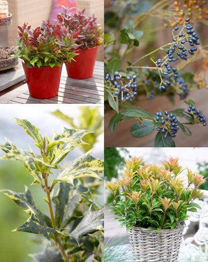 spannend-wintergroen