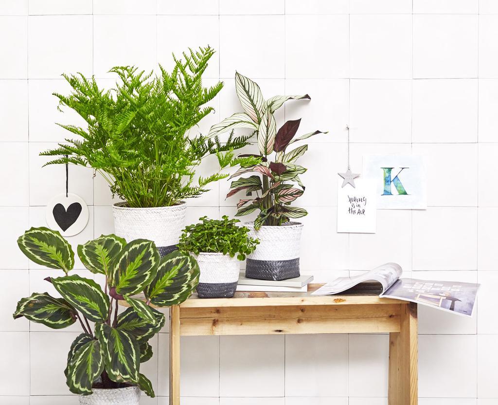 vtwonen planten in manden, actie bij AH