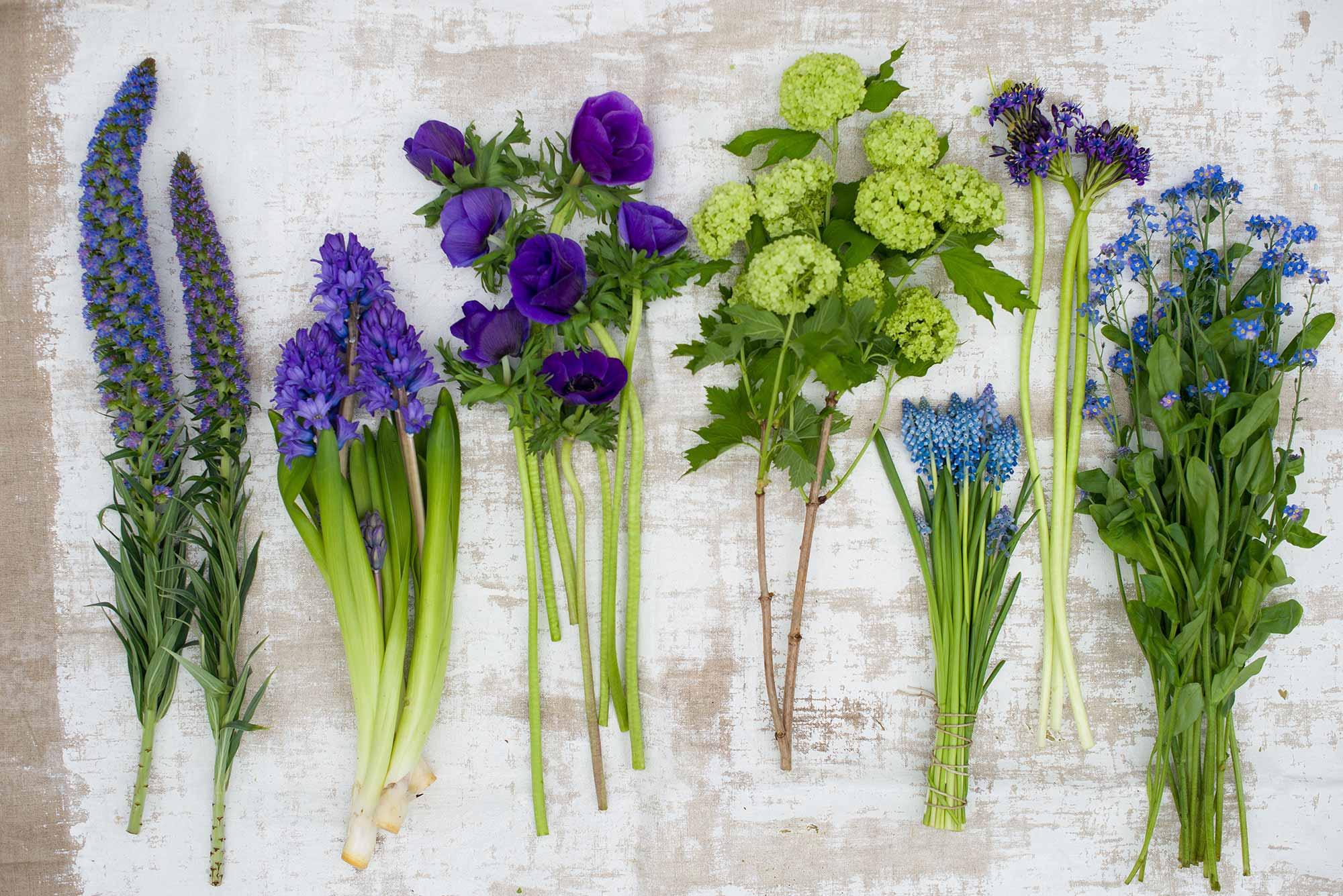 lente bloemen hyacint