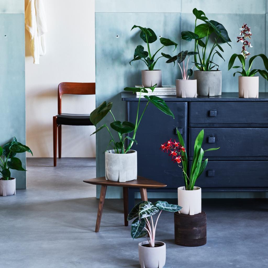 vtwonen pot en plant collectie | bloeiende kamerplanten, planten