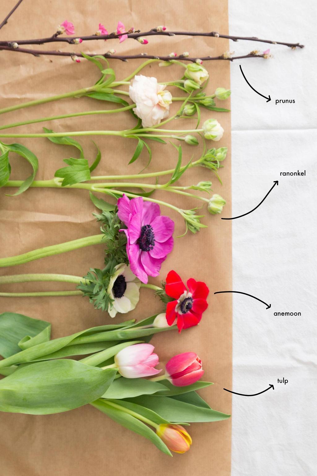 Liggende voorjaarsbloemen met beschrijving