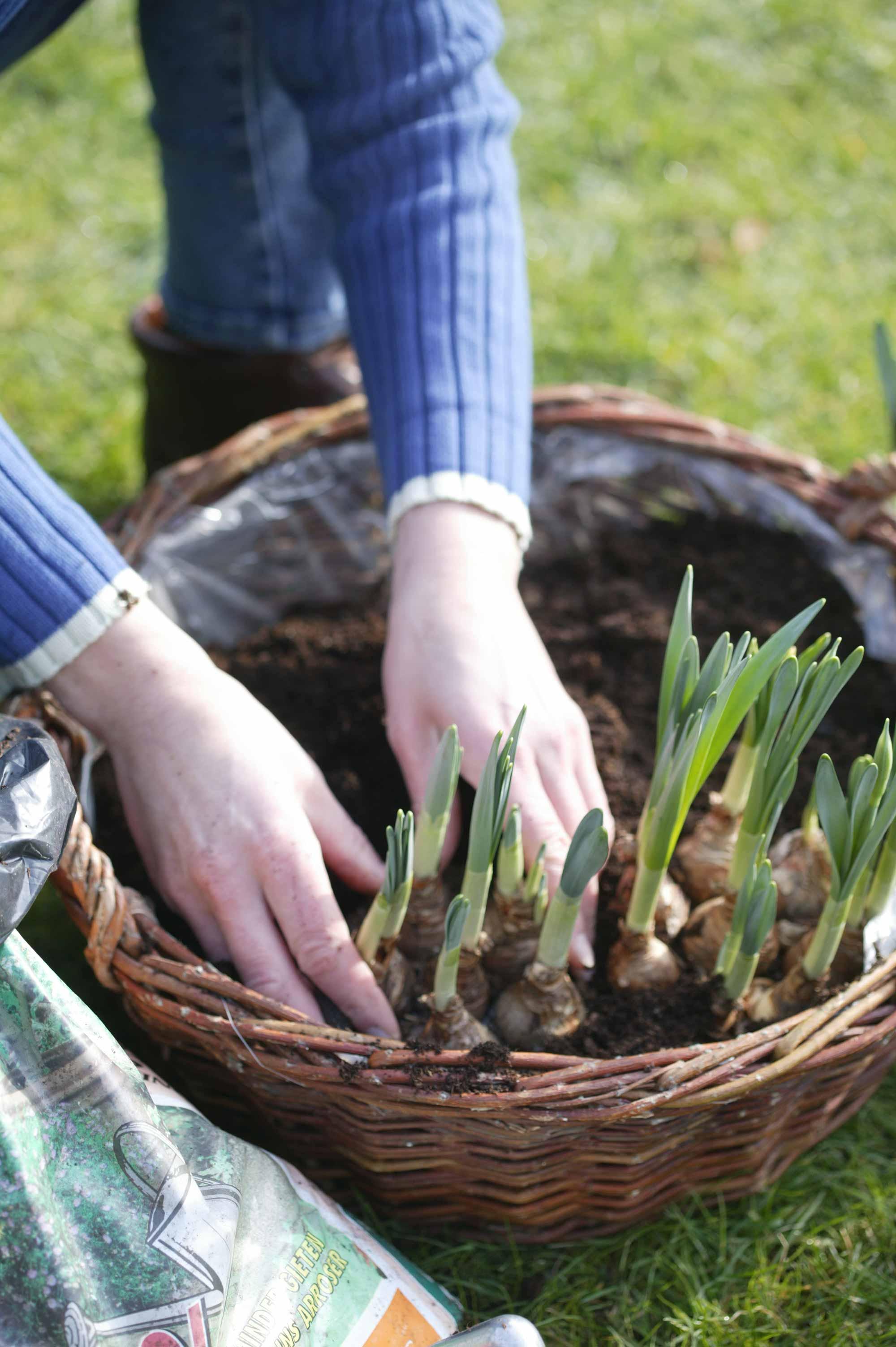 maar tuinkalender planten