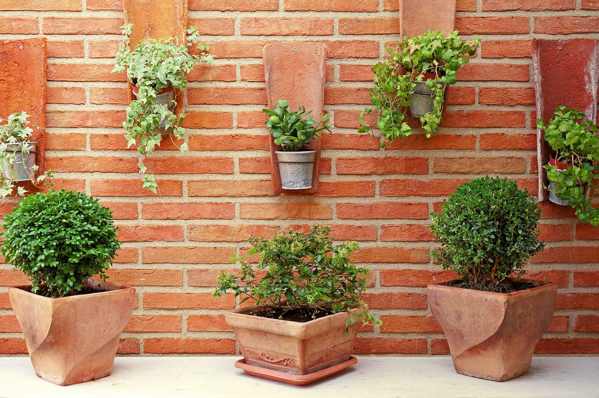 terracotta bloempot plant