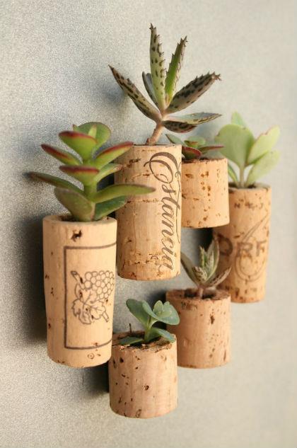 Plant in kurk