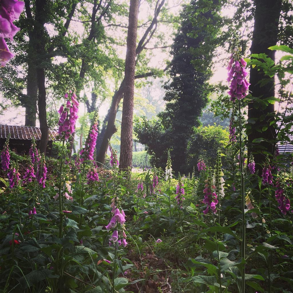 het-stukje-bos-is-mijn-favoriet-vorig-jaar-stond-hier-alleen-nog-maar-brandnetel-het-was-veel-eerk-maar-o-wat-is-het-het-waard
