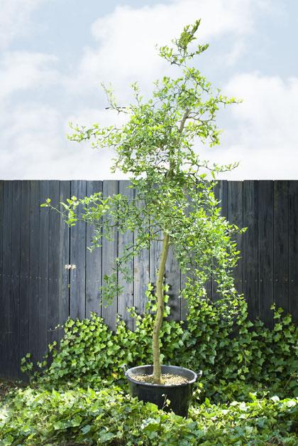 boom planten bomen
