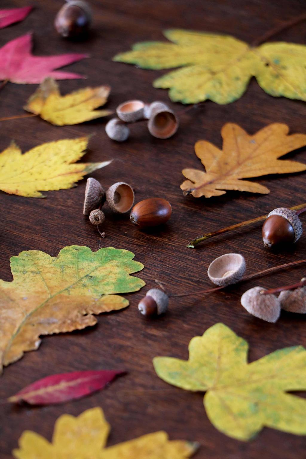 Buit herfstbladeren