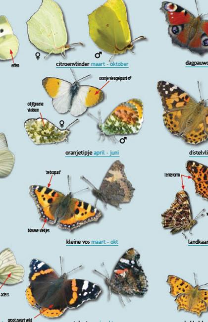 vlinders-tellen