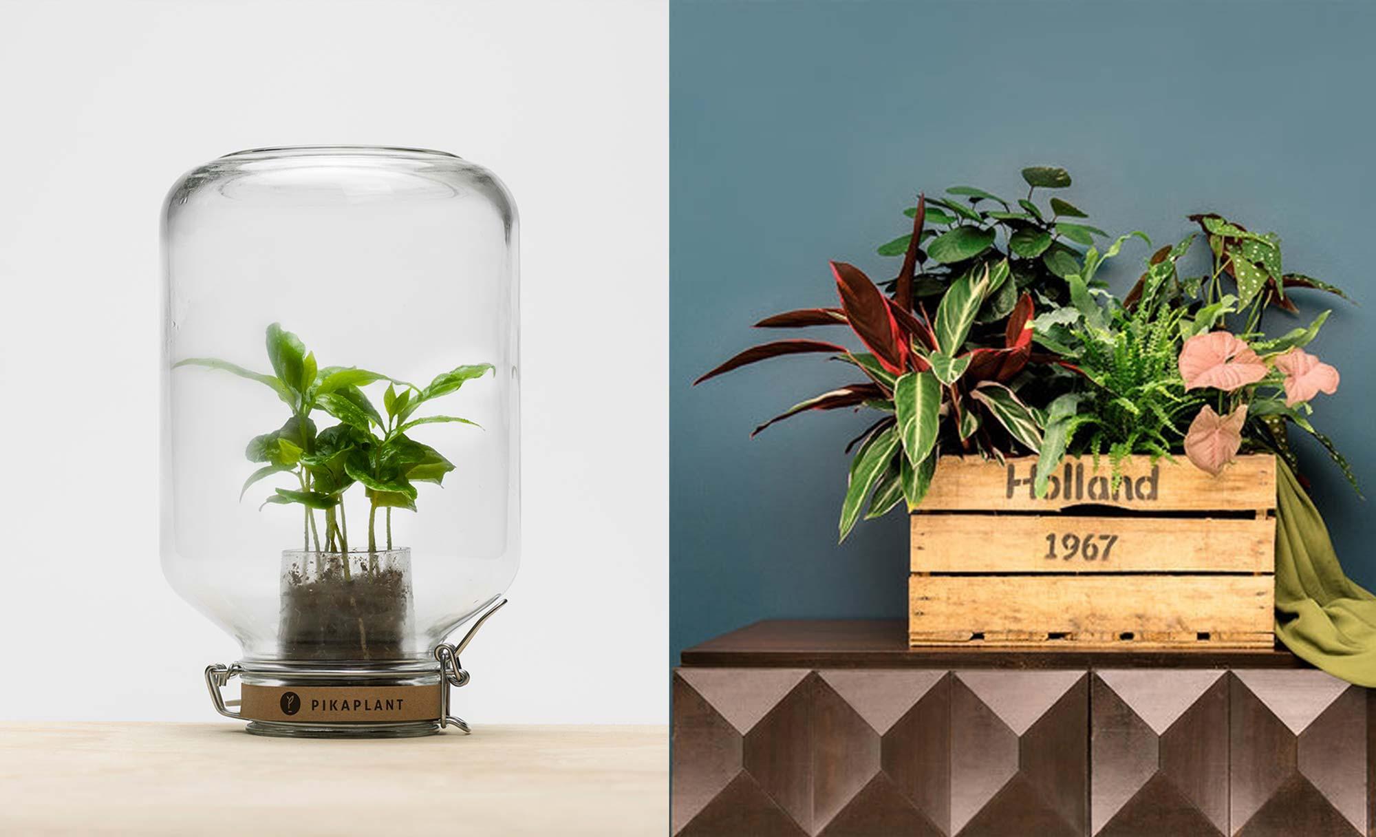greenhouse festival plant