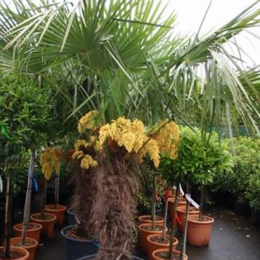 Bestel deze plant bij Directplant