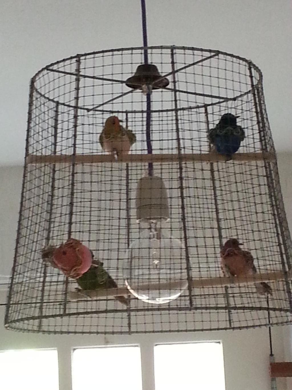 vogelkooi lamp