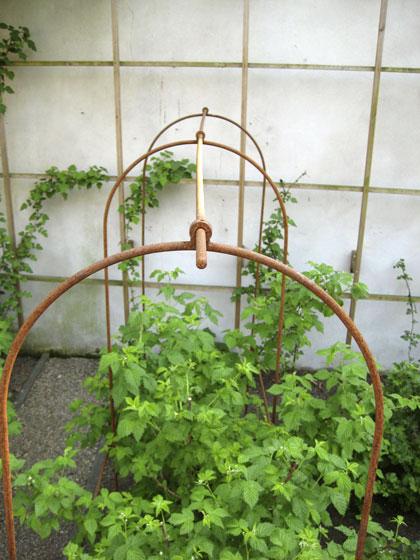 Framboos-planten