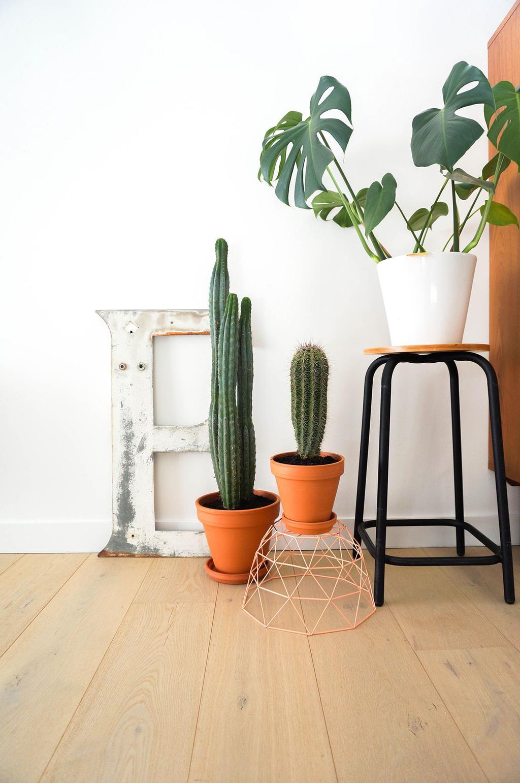 Cactussen en kamerplant in pot