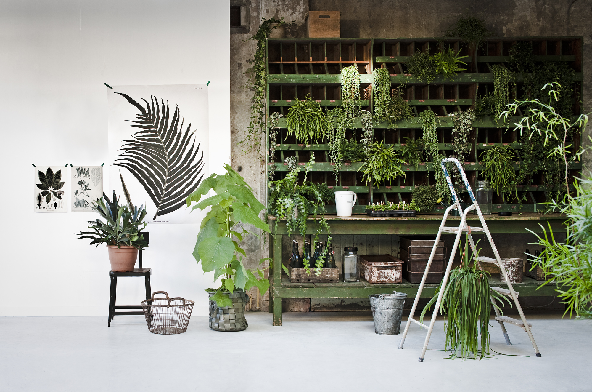 groen plant