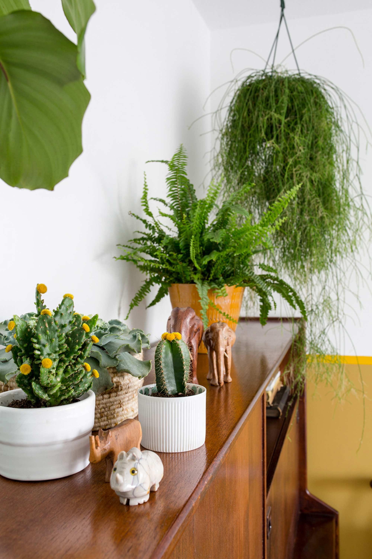 planten op kast
