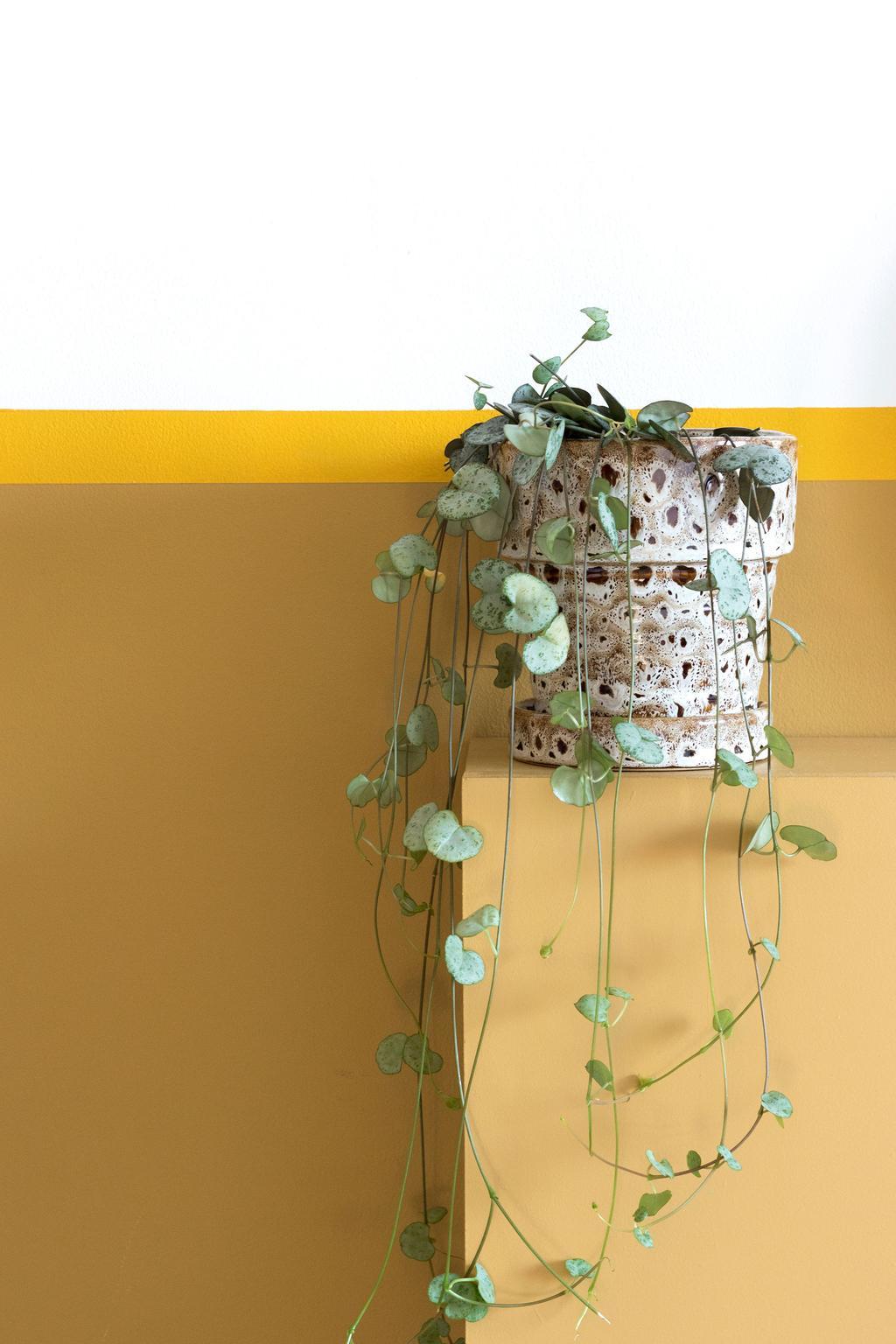 Gele lambrisering met twee kleuren geel en een plant op een plantenstandaard