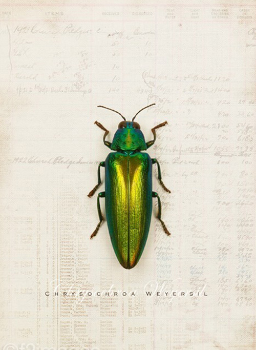 print poster insect