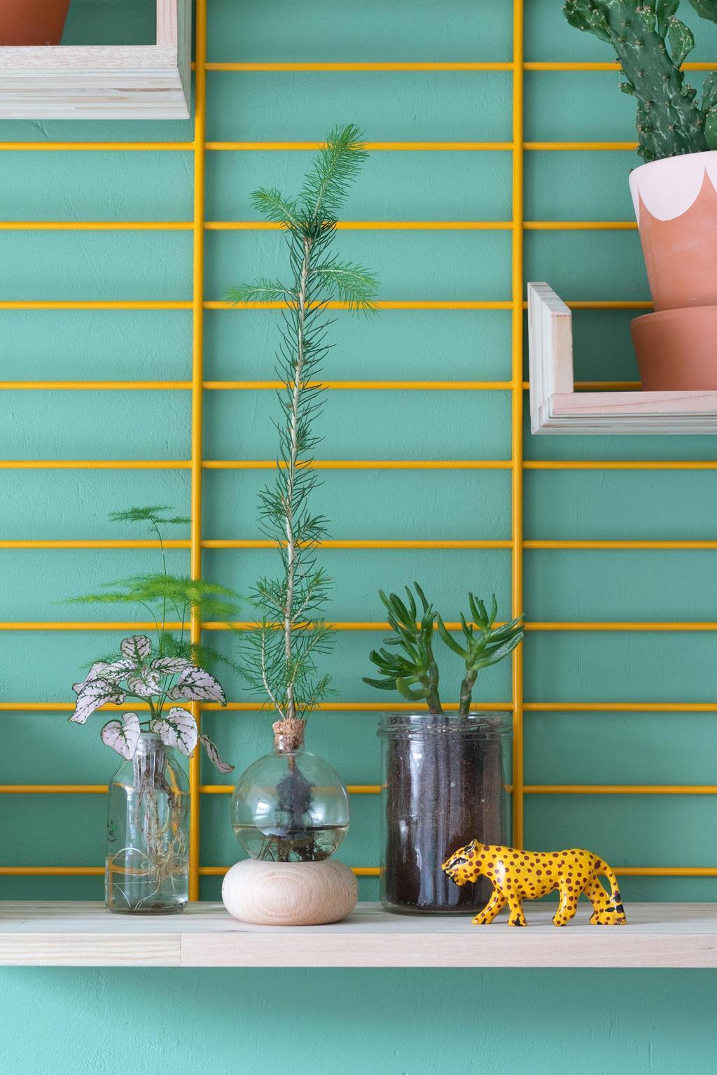 The Green Bar voor blauwe muur met rek