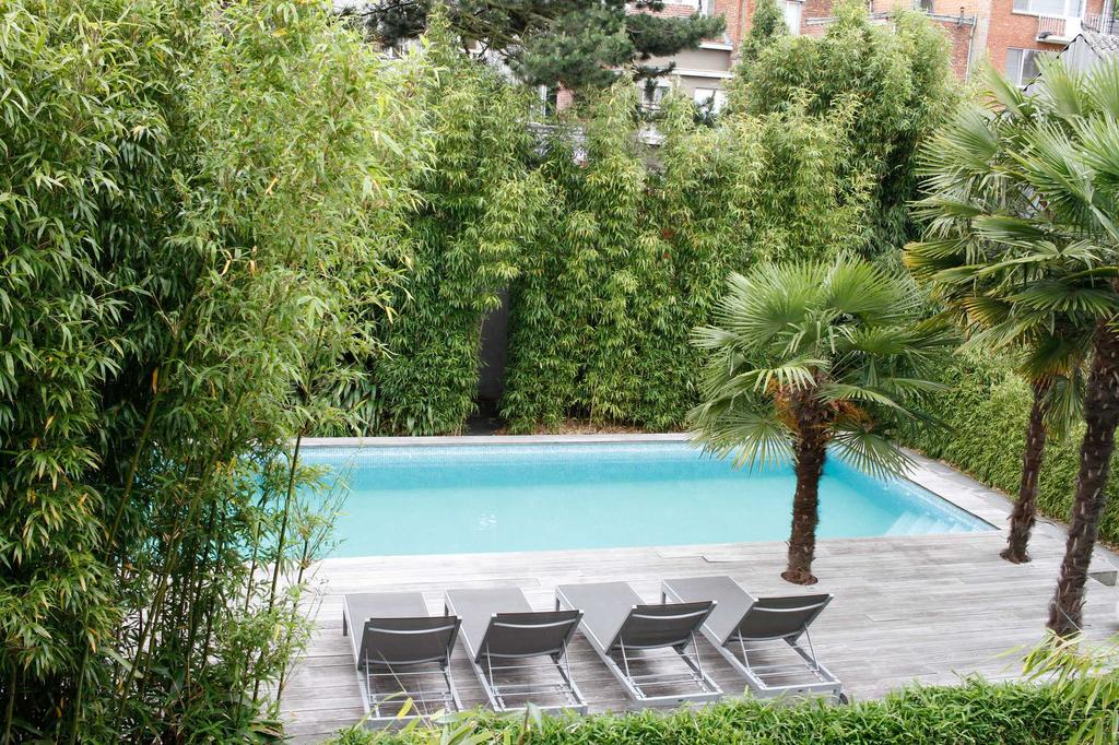 zwembad planten palmboom