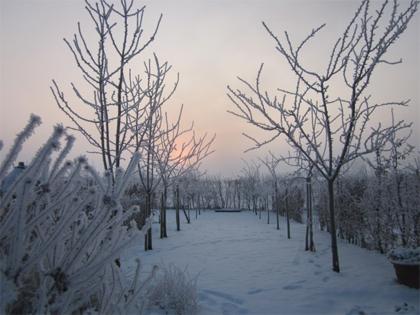 winter bij landseinde