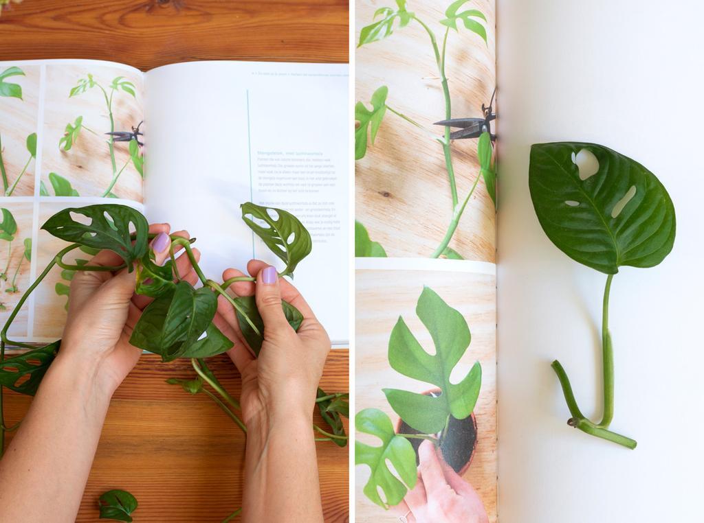 Planten stekken | tafelboek